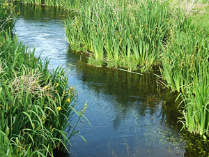 Exploring a Native American Holistic View of Water